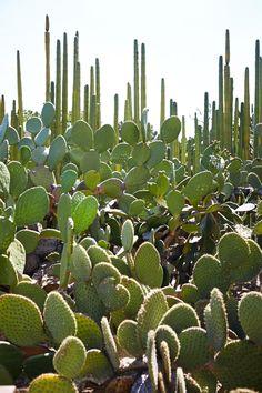 A collection of cactus varieties at the Jardín Etnobotánico de Oaxaca.