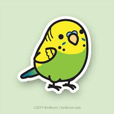 Image result for parakeet