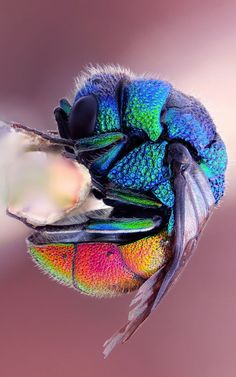 Colorful Bee...what an awe inspiring artist our Creator is!     hip hop instrumentals updated daily => http://www.beatzbylekz.ca