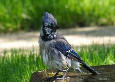 """""""Wet, Blue, and Probably Pissed"""" - a photo by Harry Lipson, via Flickr. More at harryShots.com"""