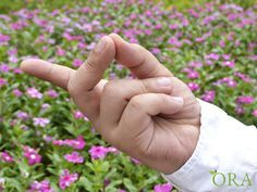 The Bronchial Mudra is very useful for the treatment of asthma as they have an impact on the biological map on the brain. This can be manipulated through the mudra in order to produce a positive ef…