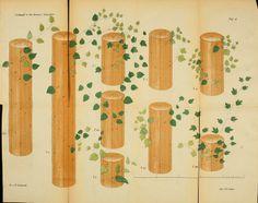 Jahrg.13-14 1871-1872 - Verhandlungen des Botanischen Vereins für die Provinz Brandenburg. - Biodiversity Heritage Library