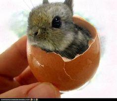 cadbury bunny!  eeeeek!! @Ashley Evans
