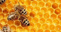 Il Miele fa bene? Ecco come va consumato, i benefici e come riconoscere quello falso