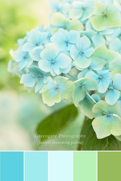 Hydrangea Photo Print flower photography hydrangeas art wall decor gifts for her bedroom decor photography print art southern art Renovieren Color Schemes Colour Palettes, Colour Pallette, Color Palate, Color Combos, Beautiful Color Combinations, Design Seeds, Photo Print, Color Psychology, Psychology Meaning