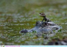 - Foi aquele ali, papai, que me chamou de lagartixa!! Dá uma dura nele!! (rsrs)
