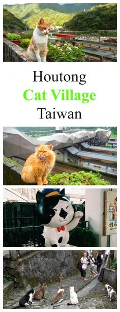 """What to do in Taiwan? You can visit """"cat village"""" Houtong that relies almost entirely on cat-related tourism (though you can also visit the former mining facilities). Read more: http://www.traveling-cats.com/2014/04/cats-from-houtong-taiwan.html (cats / cat village / Houtong / Taiwan / What to do in Taiwan? / What to visit in Taiwan? / cat lovers / mining facilities Taiwan / cats in Taiwan / cats in Asia)"""