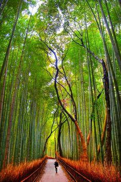 Sagano Bamboo Forest, hermoso bosque de bambú situado en Arashiyama, a 30 minutos de Kyoto, Japón.