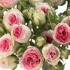 FiftyFlowers.com - Pink n Green Eden Spray Garden Roses. So pretty.
