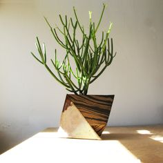Sculptural Ceramic Planters by Cody Hoyt