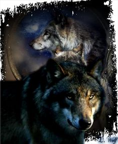 love the wolf, so powerful