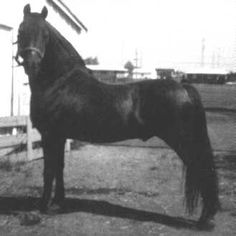Reg. No.: 11162 Name: MR BREEZY COBRA Sire: 10386 THE AIRACOBRA Dam: 06961 JENNEY LAKE Sex: Stallion    Color: Chestnut Foaled: 05-02-1954 Breeder: Albert Kaegel Totals By Color: B: 40    Br: 1    Bu: 1    Ch: 78 Totals By Sex: Stallions: 28    Mares: 54 Geldings: 38 Grand Total: 120