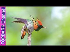 10 Especies de Colibríes mas Increíbles del Mundo - YouTube