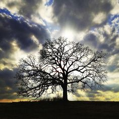A photographer and his friend, 'that tree' | KPLU News for Seattle ...