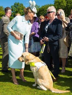 Sophie, Countess of Wessex, meets Royal Navy veteran Sue Eyles, from Brighton and her guide dog Zara at a garden party at Buckingham Palace. Buckingham Palace Garden Party, Veterans Association, Palais De Buckingham, Viscount Severn, Lady Louise Windsor, Princess Kate Middleton, British Royal Families, Royal Garden, Navy Veteran