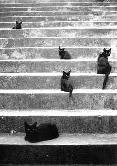 {black kitties on stairs} *do not know the original source, sorry!