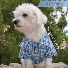 Dog Shirt Pattern size M, Dog Clothes, Sewing Pattern, Dog Shirt - Shirts For Dogs - Perros shop Dog Coat Pattern, Vest Pattern, Pattern Sewing, Pattern Drafting, Free Pattern, Dog Tuxedo, Tuxedo Jacket, Dog Clothes Patterns, Shirt Patterns