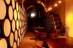La Cofradia Tequila cellar