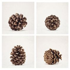 Pinecone Prints, Set of Four, Rustic Nature Photography, Fall, Winter Decor, Wall Art, Neutral, Brown & Gray Home Decor, Discounted-SAVE 25%