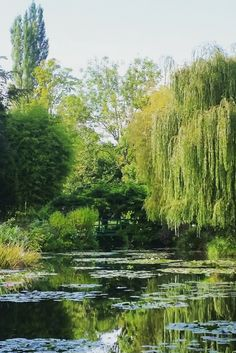 Der Seerosenteich von Claude Monet in Giverny.  #frankreich #france #normandie #normandy #claudemonet #giverny (scheduled via http://www.tailwindapp.com?utm_source=pinterest&utm_medium=twpin&utm_content=post147931477&utm_campaign=scheduler_attribution)