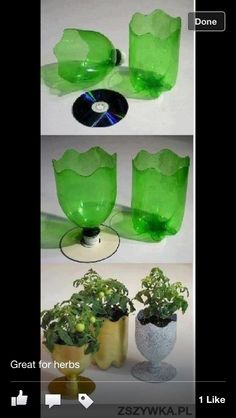 Pot plant bottle