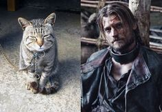 Cats of Thrones : Jaime Lannister