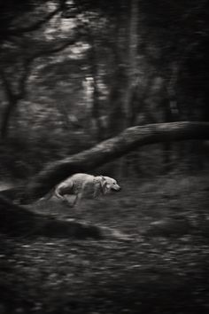 Aqutaq Getting Her Wild On in the Woods of Marin, Marin CA 2012 by Camille Seaman