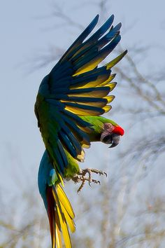 Art photo ~ Awesome capture of this beautifull bird in action