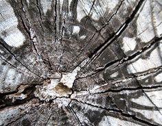 "Love patterns that mother nature makes. @Behance portfolio: ""Black Sun"" http://be.net/gallery/36256345/Black-Sun"