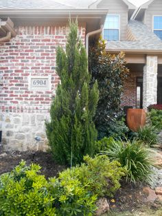 Spartan Junipers and Little Gem Magnolias are great for front yard flower beds. // Image from Treeland Nursery