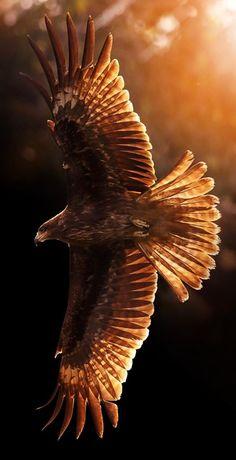 Pretty Birds, Beautiful Birds, Animals Beautiful, Eagle Images, Eagle Pictures, Aigle Animal, Nicolas Vanier, Natur Wallpaper, Animals And Pets