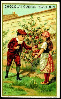 "https://flic.kr/p/9G5AtJ | French Tradecard - Fruit Pickers #3 | Chocolat Guerin-Boutron ""Children Picking Fruit"" c1900"