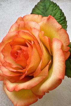 Gum Paste Rose in light green and orange