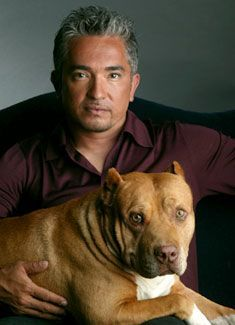 Cesar Millan with Daddy. You've gotta admit, even though Cesar is older he is HOT! Big Dogs, I Love Dogs, Cute Dogs, Dogs And Puppies, Puppy Love, Doggies, Cesar Millan, Perros Pit Bull, Pitbulls