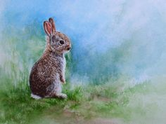 22 Best irish hare images in 2019 | Bunny, Rabbits, Bunnies