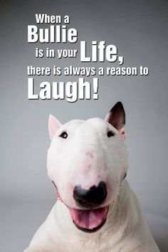 True Statement about #Bullies!