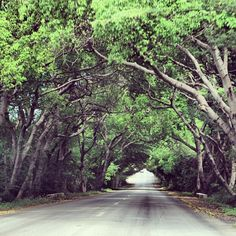 122 vind-ik-leuks, 9 reacties - Curacao Trip (@curacaotrip) op Instagram: 'Driving through Banda Bou sometimes feels like entering a fairy tale #bandabou #nature #green…'