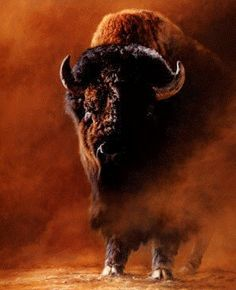 Tsahizn Tseh ƸӜƷ Goyakhala American Bison, American Animals, European Bison, Buffalo Animal, Magnificent Beasts, Musk Ox, Wild Life, Native American Indians, Art Paintings