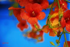 """""""on blue"""" #flowers"""