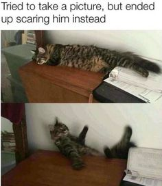 Do you need funny animal pictures with captions? Well, check these top 54 fresh funny animal memes dump of the day that will make you LOL. Funniest Cat Memes, Funny Animal Memes, Cute Funny Animals, Funny Cute, Funny Memes, Cute Cat Memes, Pet Memes, Animal Humor, Funny Videos