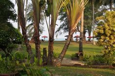 The view from my private villa at Eastern Pavilion along the beach of Cherating