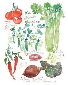 Les plantes potagères poster