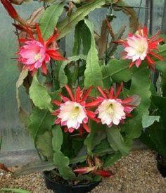 Flores de cactus y suculentas