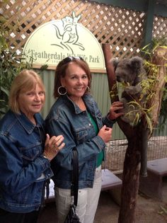 We like Koalas! Other Countries, Australia, Country, Koalas, Rural Area, Country Music