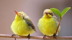 Cute Baby Birds | Cutest Paw