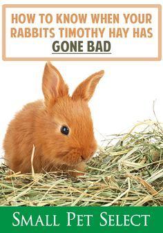 How to know when hay has gone bad House Rabbit, Has Gone, How To Know, The Selection, Bunny, Parenting, Rabbits, Pets, Parents