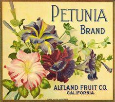 Petunia Brand. Altland Fruit Company, California. c. 1890-1900's.