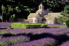 Abbaye de Senanque...Love Lavender <3