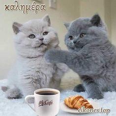 Cats, Animals, Top, Happy Thursday, Gatos, Animales, Animaux, Animal, Cat
