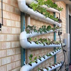 Stunning Vertical Garden for Wall Decor Ideas Do you have a blank wall? the best way to that is to create a vertical garden wall inside your home. A vertical garden wall, also called… Continue Reading → Hydroponic Gardening, Organic Gardening, Gardening Tips, Gardening Magazines, Gardening Quotes, Hydroponics System, Vegetable Gardening, Vertical Garden Wall, Vertical Gardens